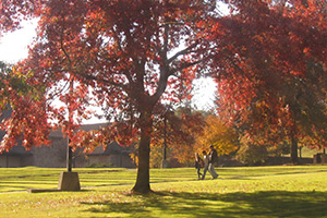 students-fall-campus