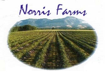 NorrisFarms-Blueberries